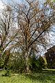Münster, Park Sentmaring, Naturdenkmal -- 2015 -- 5702.jpg