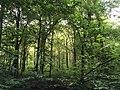 Magical woodland scene.jpg