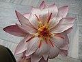 Mahabodhi Temple - A Lotus Flower.jpg