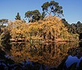 Mallard Lake in Golden Gate Park.jpg