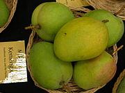 Mango Kensington Asit ftg.jpg