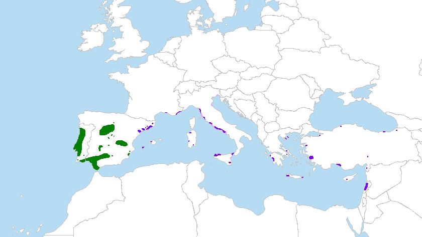Mapa Pinus pinea