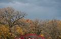 Maple Grove (15622646457).jpg