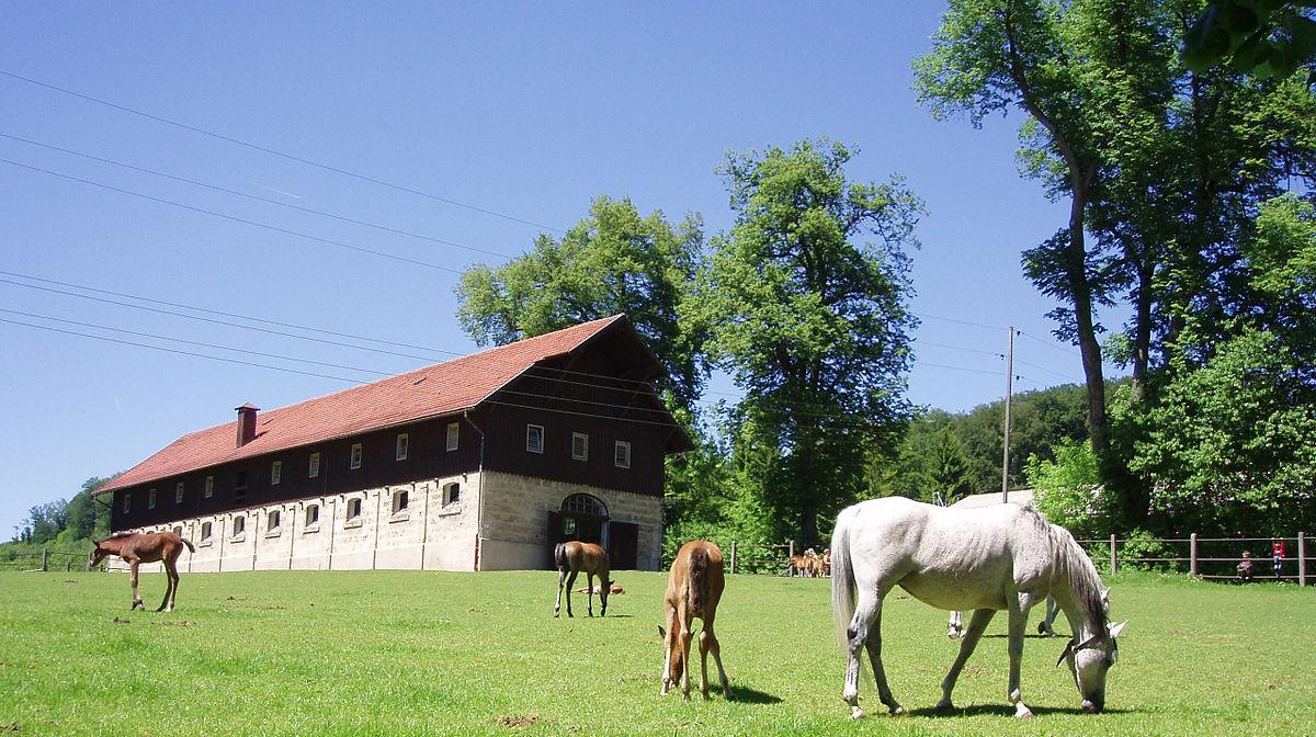 Marbach Laufstall Desen Gutuie