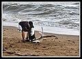 Margate Pelican Rescue- Hammy-08 (6807932558).jpg