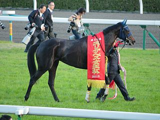 Marialite (horse) Japanese-bred Thoroughbred racehorse