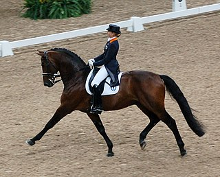 Dressage highly skilled form of riding performed in exhibition and competition