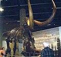 MastodonSkeleton.jpg