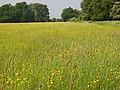 Meadow, White Waltham - geograph.org.uk - 814127.jpg