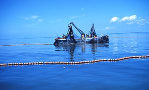 Menhaden fishing - purse seine boats encirclin...