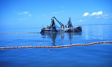 Menhaden fishing - purse seine boats.jpg