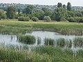 Merzse Marsh Nature Reserve, swan family, Rákoshegy, 2016 Hungary.jpg