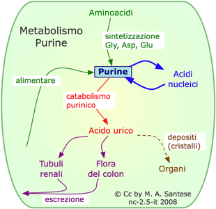 recetas para personas acido urico alto remedio caseiro para acido urico elevado cibi da evitare in caso di acido urico alto