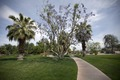 Michael S. Wolfson Park, Palm Springs, California LCCN2010630228.tif