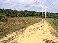Microdesert Site - Rare Insect Community - panoramio.jpg