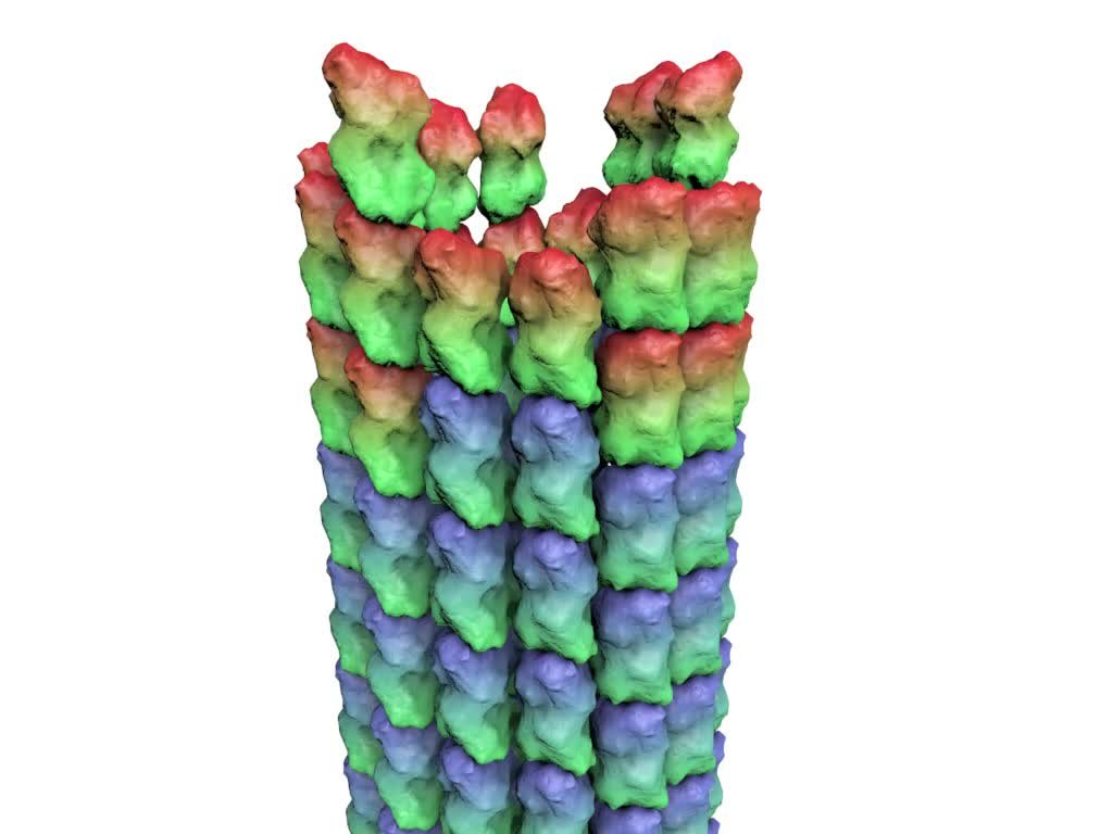 Investigation in microtubule dynamic instability