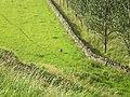 Millbank Haugh and browsing Roe Deer - geograph.org.uk - 906382.jpg