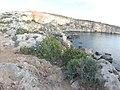 Mistra, St Paul's Bay, Malta - panoramio (18).jpg
