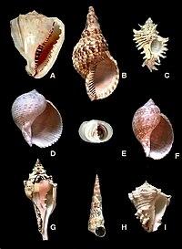 Gasteropodos ejemplos yahoo dating
