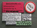 Monomorium versicolor casent0442524 label 1.jpg