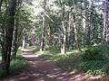 Mooi pad in Middenduin.jpg