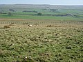 Moor and pastures - geograph.org.uk - 421432.jpg