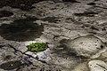 Mose i ruinene på Hovdetoppen i Gjøvik.jpg