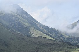 Mount Nimba - cloud forests.jpg