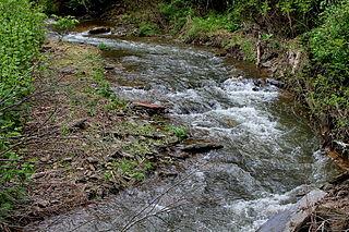 Mugser Run tributary of South Branch Roaring Creek in Pennsylvania
