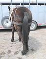Mule tail.JPG