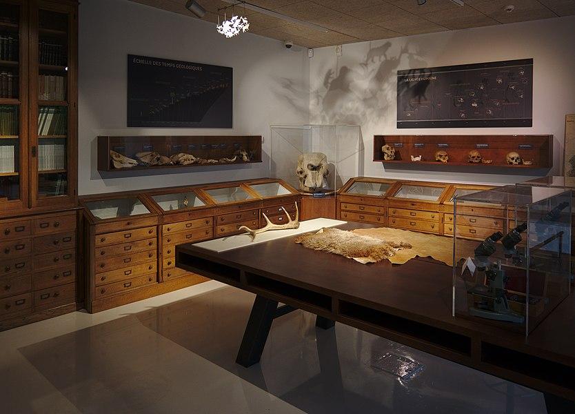 Wood cabinets room, in the musée-forum de l'Aurignacien