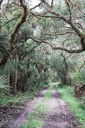Myakka River State Park - The park in summer