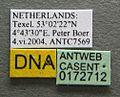 Myrmica gallienii casent0172712 label 1.jpg