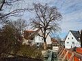 ND Linde Steinachbrücke Nürtingen.jpg