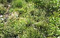Natural rockery (det.) (Heit.) (24561294181).jpg
