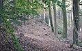 Naturpark und Biosphaerenreservat Pfälzerwald - panoramio (1).jpg