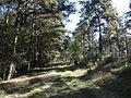 Naturschutzgebiet Löptener Fenne–Wustrickwiesen 02.JPG