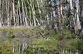 Naturschutzgebiet Loben 12.JPG