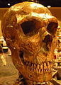 Neanderthalreconstruction.jpg