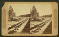 Near the town of Williams, Arizona, by Continent Stereoscopic Company.png