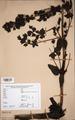 Neuchatel Herbarium Types NEU000113064.tif