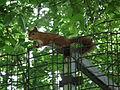 Neugieriges Eichhörnchen.JPG