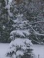 New Snow 2008 (2155415980).jpg
