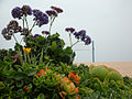 Newport Beach coastal landscaping.JPG