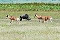 Ngorongoro 2012 05 30 2682 (7500969272).jpg