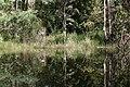 Nilgiris, Tamil Nadu, India - panoramio - Robert Helvie (6).jpg