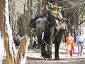 Nisargadhama Elephants.jpg
