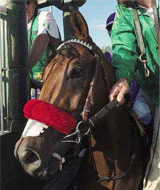 Nyquist (horse) - Nyquist in the starting gate at the Kentucky Derby