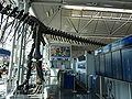 ORD Brachiosaurus altithorax P1000288.jpg