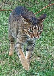kattemor flytter killing
